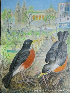 A pair of America Robins