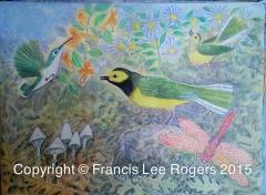 Francis Lee Rogers Hooded Warbler Hummingibrd