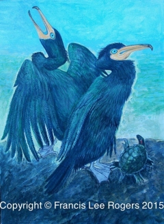 Great Crested Cormorants By Francis Lee Francis