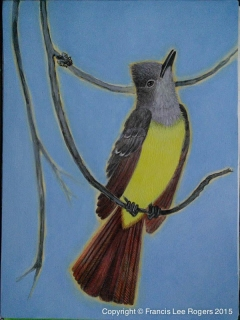 Great Crested Flycatcher about to act 82015