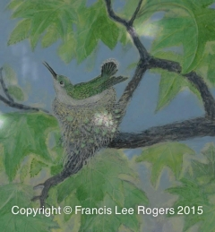 Hummingbird on her nest By Francis Lee Rogers