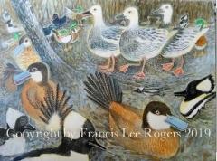 Ducks/Waterfowl