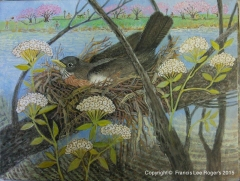 Female Robin sitting on nest