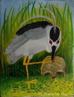 Black-rowned Night heron hunting