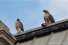 Christo & fledging