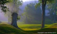 Morning mist at Innesfree Garden