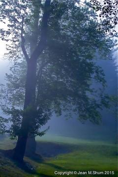 Morning mist at Innesfree_ Garden