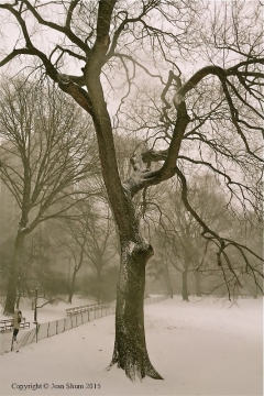 Snow day at Central Park
