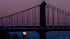 Hunter moon under the Williamsburg bridge